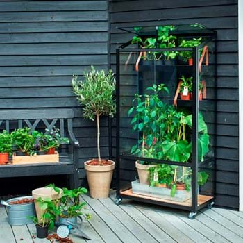 Grow in glass on your balcony or in your atrium